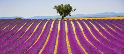 Aromatherapie von TAOASIS