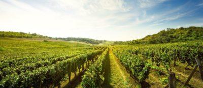 Caudalie – Kosmetik aus Weintraubenkernen