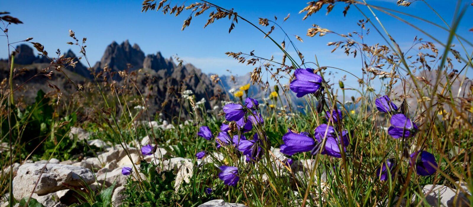 Symbolbild Rausch Kosmetik zeigt Bergblumen